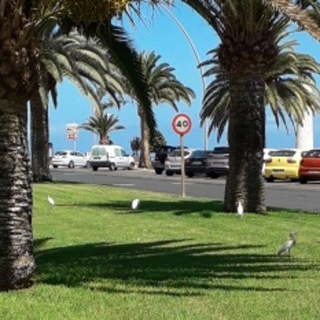 Morro del Jable, España: Wild Little Egrets