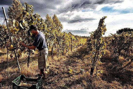 庞贝古城与维苏威葡萄酒之旅从阿马尔菲海岸出发,跳过线路-小团体游