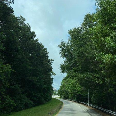 Fairburn, GA: Gorgeous trees 🌳