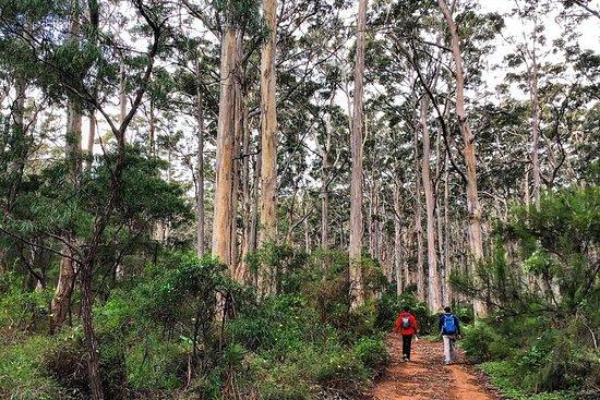 Guidede turer på Kapp til Kapp - Redgate Beach til Boranup Forest