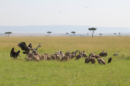 Oldome African Safaris