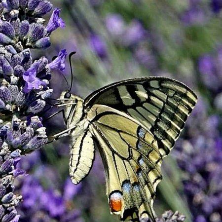 Véneto, Italia: Wonderful nature