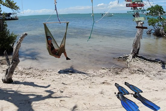 Saltwater Seafari