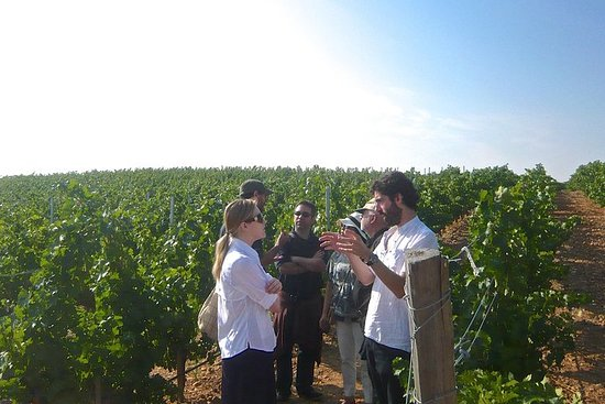Wine Tasting Small Group Tour from Madrid