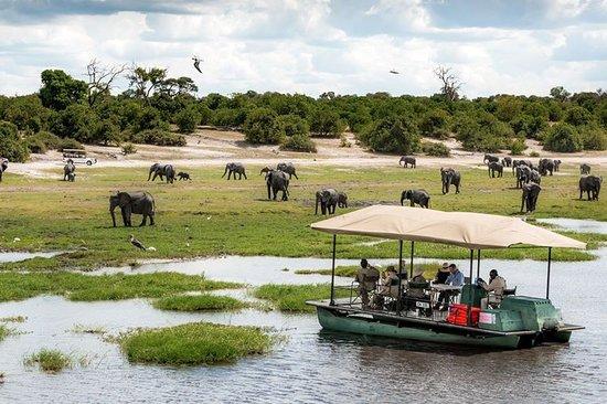 Southern Dynasty Safaris