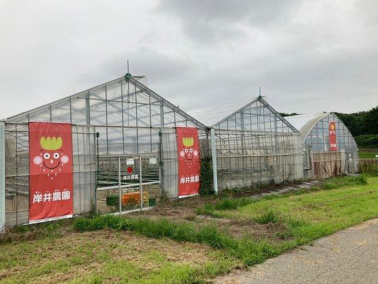 Kishii Farm