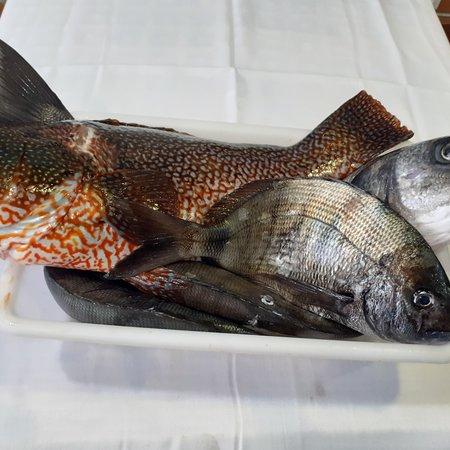 Pescadooó
