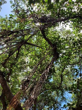 The Greatest Tree
