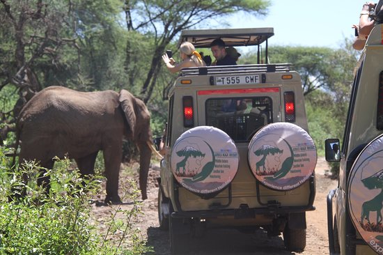 Africa Magic Holidays & Tours