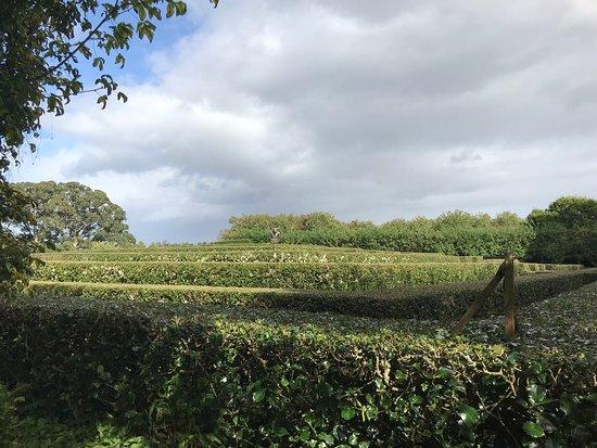 Garden maze at the castle