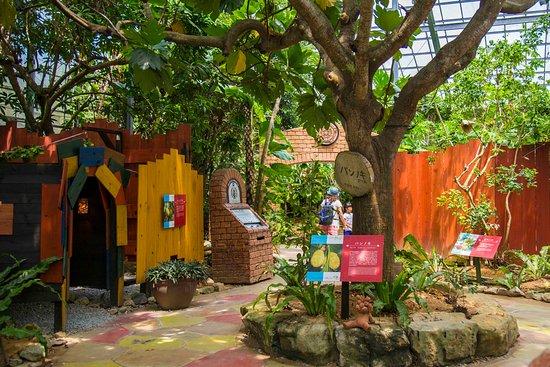 トロピカル王国物語の世界には、たくさんのフルーツも植栽されております。