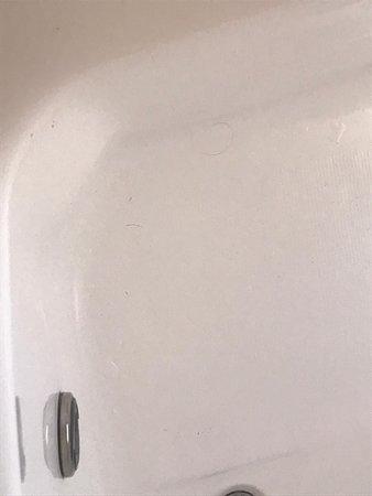 """Sde Eliezer, Israel: חוויה נוראית - לא להתקרב !!!! הגענו לצימר ביום שישי 26.06.20 ראינו בג'קוזי שיערות, סימנים של ידיים על השייש,גו'קים מתים על הוילונות וקורי עכביש בכל פינה בצימר , 6 חשופיות על השולחן אוכל !!!! !פשוט מזעזע !!!!!!!! לא היה לנו מים חמים ובעלת הצימר התווכחה איתנו שיש מים חמים עד שהיא הגיעה לצימר וראתה במו עיניה שאין מים חמים. אומנם באנו לבית בטבע אבל לא לליכלוך בתוך הטבע, הרגשנו שאנחנו באפגינסטן ולא באירוח בצפון שלוקח 1500 ש""""ח עבור צימר!!!!!!!!!!!!!!! בושה !!!"""