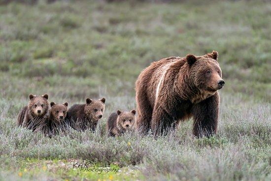 그랜드 테톤 국립공원(및 인근) 사진