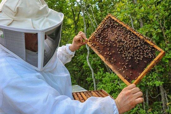 Ecotour: saveur miel et noix de coco