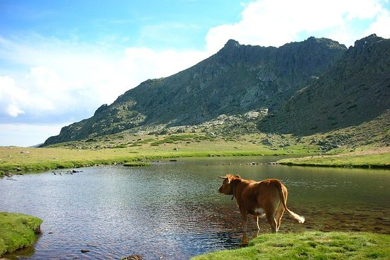 Full-Day Private Guided Tour to Guadarrama National Park