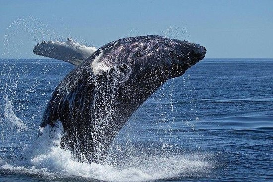 Kaapstad - Private Whale Watching Tour ...