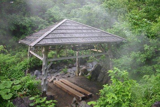 Heldags privat guidet japansk varm våropplevelse