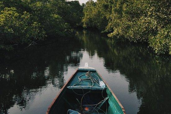 Mangrove Cruise i Cherating