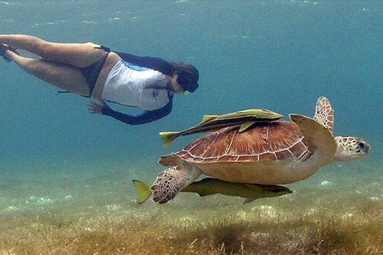 Halvdags privat tur til Rose Island og Green Turtle Cay-billede