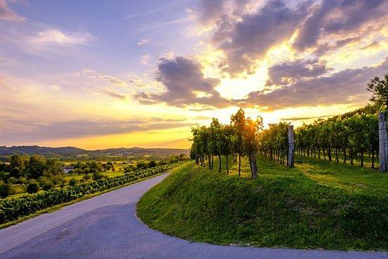 Goriska Brda & Vipava valley wine tour | Private trip from Ljubljana