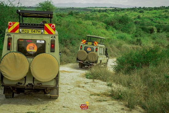 Finding the good! Because Safaris can't wait.🤠 We're already traveling as we take the necessary precautions. We shall indeed freely travel again.  __ Welcome to Kenya We're getting ready for the Great Wilderbeest Migration 2020 in Masai Mara.  __ Inquiries & Bookings:  ☎️: 0712 08 08 70 | 0714 32 39 39 📧 : operations@msaniiafricasafaris.com