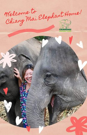 Re-open again after Covid situation, our herd was so happy to see us. If you are in Chiang Mai, Thailand don't miss out our Free entry from 29 Jun - 29 Jul 2020, from 9.00 am - 3.00 pm. Please Note: - Limited visitors per day, inbox us to book in advance please - Arrange your own Transportation - Please wear mask and keep distance from others - Activities are Only feeding and observing the elephants - Purchase some food to feed the elephants at our camp  Thank you and see you soon!