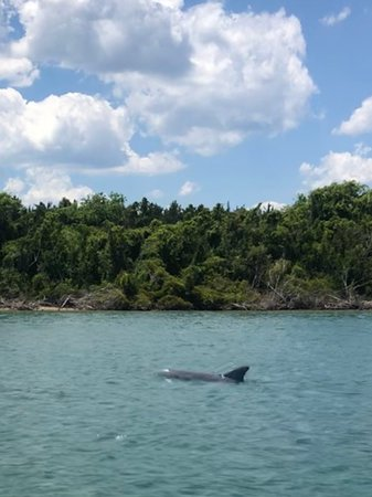 If you love dolphin watching, keep an eye our!