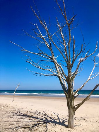 This picture is taken from the beach side of the 'elbow' sandbar less than a 10 minute boat ride from the marina we launch our rentals from. Once you anchor up, this is a short walk away to explore the trees, seashells, and watch the birds from the sanctuary area.