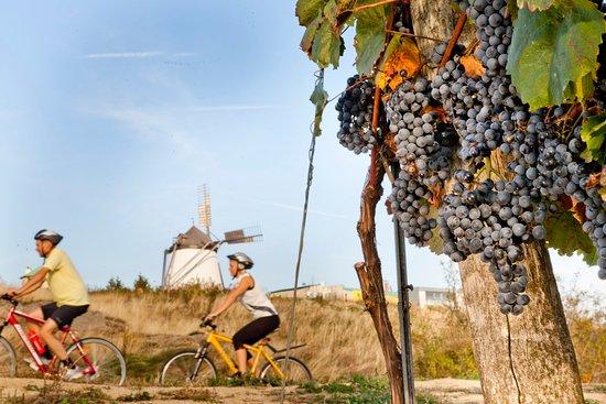 Im Herbst präsentieren sich die Weingärten in voller Pracht!
