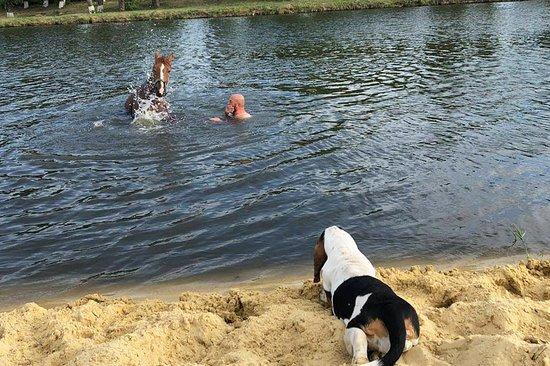 В летний день очень приятно искупаться в пруду с чистой водичкой.