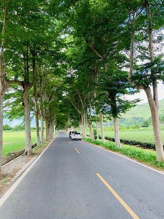 鹿野龍田-綠色隧道