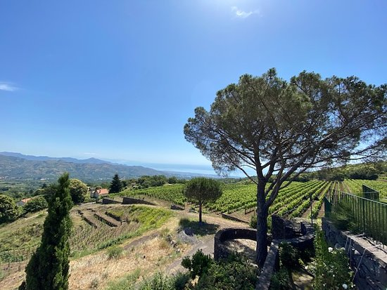 Etna Countryside Food and Wine Lovers Tour (Small Group or Private option): View from the terrace at the winery