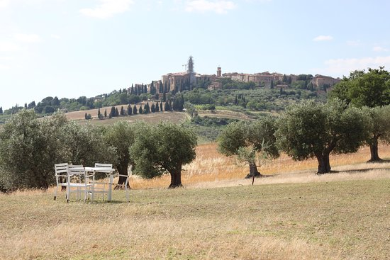 Pienza, olives and tasting!
