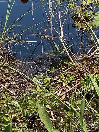 Foto de Everglades Wildlife Management Area