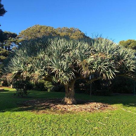 Koroit Botanical Gardens