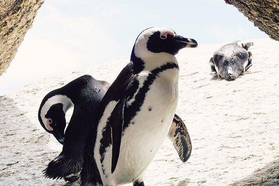 Cape Town Peninsula Private Tour