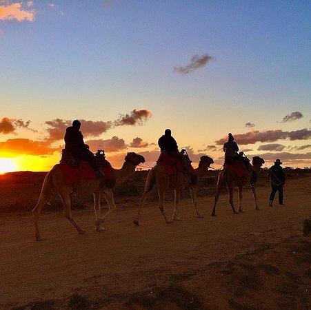 Broken Hill Camels