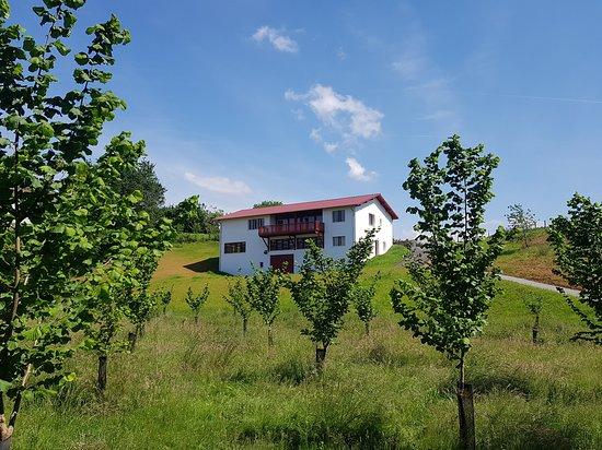 Saint-Pee-sur-Nivelle, França: Huilerie Errota - La Noisette Basque, visites, vente, dégustation et salon de thé