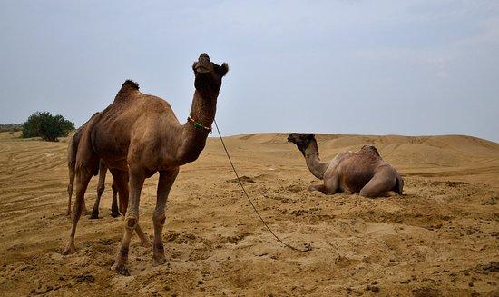Morning Desert jeep safari..Sam Desert..