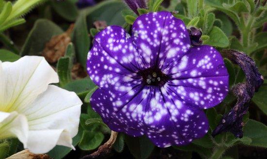 Vinchiaturo, อิตาลี: decorazioni floreali esterne al locale