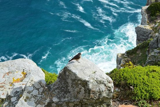 Private Tour : Hermanus Whale Watching and Wine
