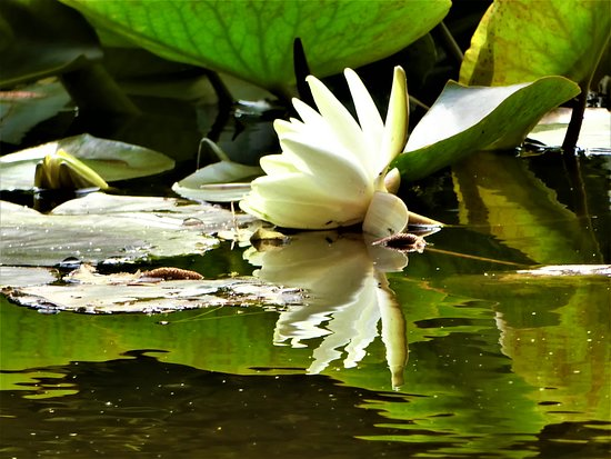 赤レンガ庁舎の池 ☆☆☆