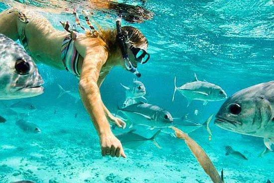 Shore Excursion: Roatan Guided Snorkel...