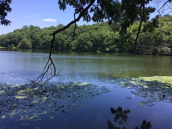Rockefeller State Park Preserve (Pleasantville) - All You ...