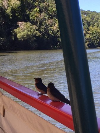 Kuranda Riverboat Sightseeing Cruise: Happy little birds along for the ride