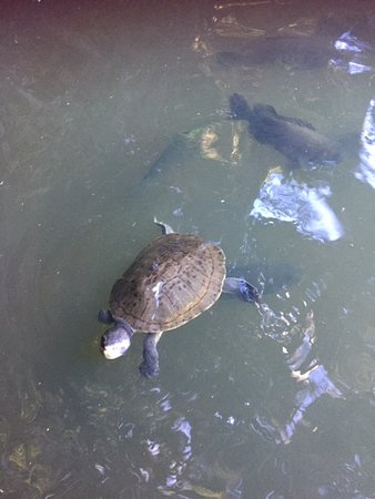 Kuranda Riverboat Sightseeing Cruise: what fun to feed the turtles and fish up close