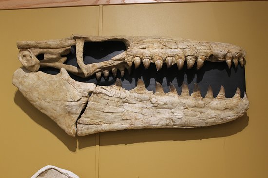 The World Fossil Finder Museum