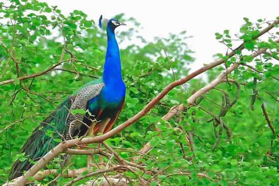 Lahugala Kitulana National Park Shared Safari