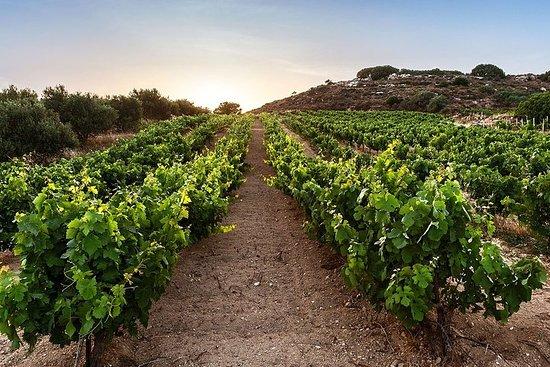 Wine Tour - Wine Stories (traslado y...