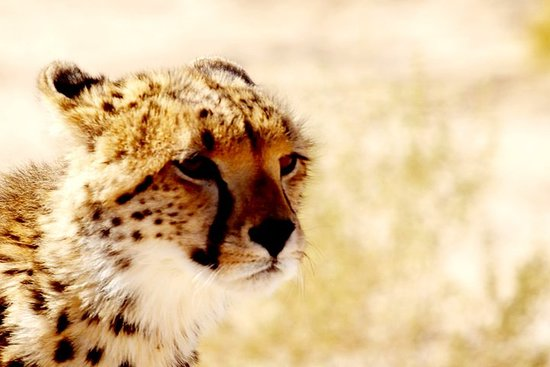17-Day Safari in Kgalagadi Park from Johannesburg